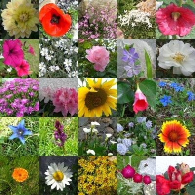 C 39 est le printemps quadra et compagnie for Catalogue fleurs par correspondance