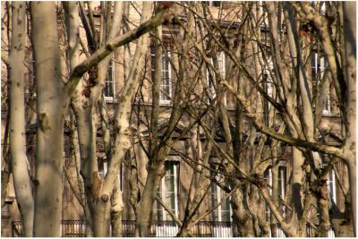 Forêt urbaine