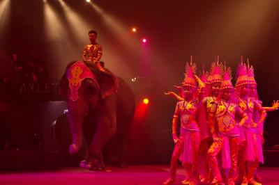 Arrivée des éléphants